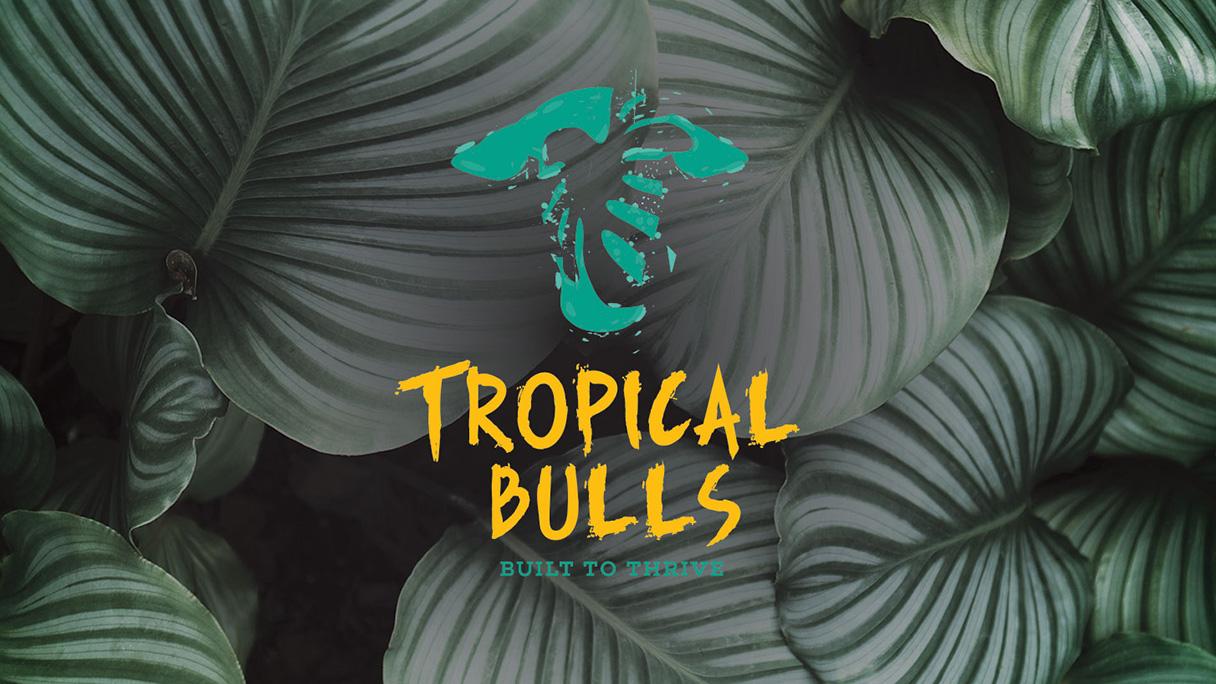 Agri Creative Tropical Bulls